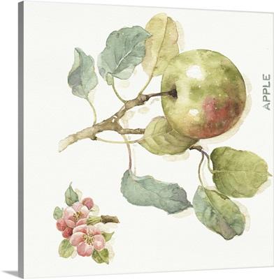 Orchard Bloom I