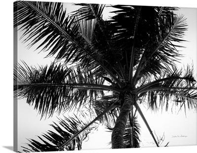 Palm Tree Looking Up III