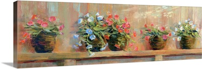 Petunias in Pots