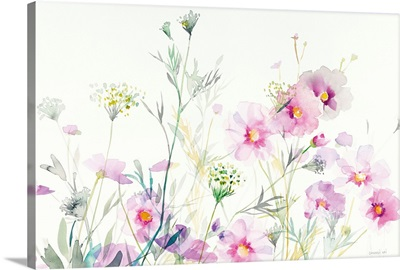 Queen Annes Lace and Cosmos on White