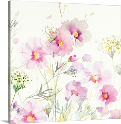 Queen Annes Lace and Cosmos on White II