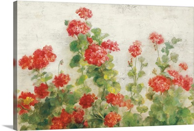 Red Geraniums on White v2