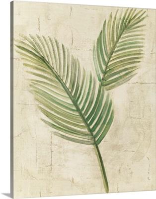 Sago Palm Leaves Neutral Crop