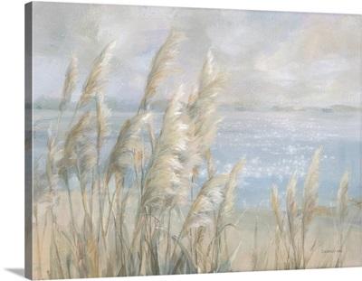 Seaside Pampas Grass