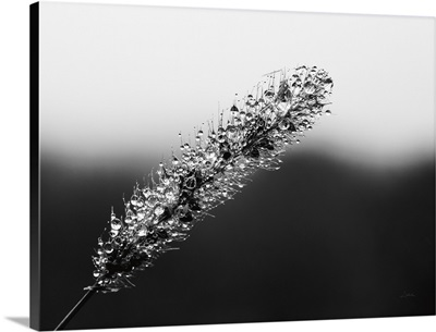 Seeds And Water II