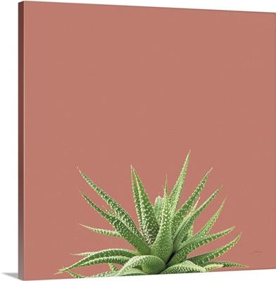 Succulent Simplicity I Coral