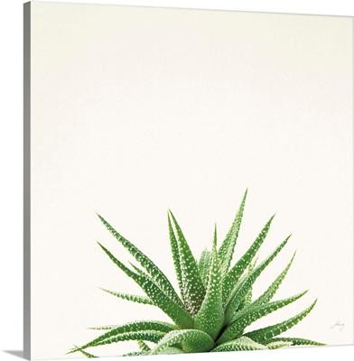 Succulent Simplicity I Neutral