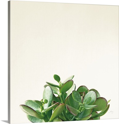 Succulent Simplicity III Neutral