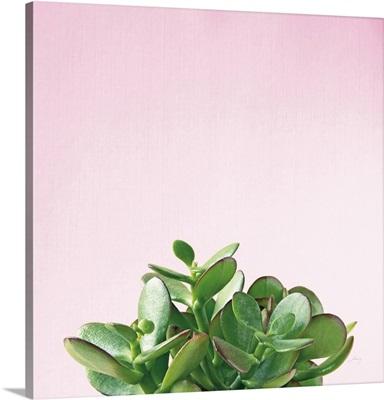 Succulent Simplicity III on Pink