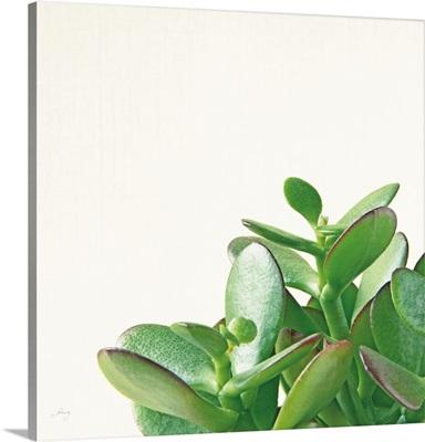 Succulent Simplicity IV Neutral