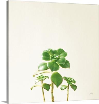 Succulent Simplicity IX Neutral