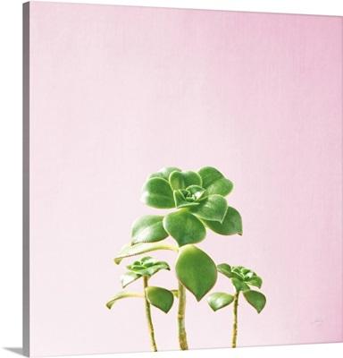 Succulent Simplicity IX on Pink