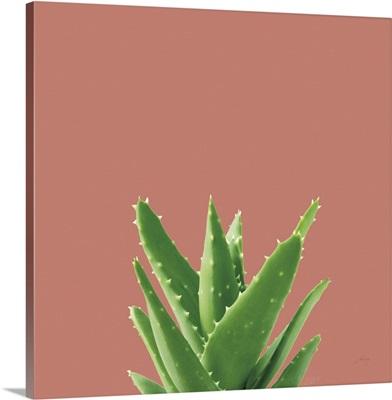 Succulent Simplicity V Coral
