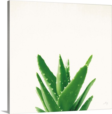 Succulent Simplicity V Neutral