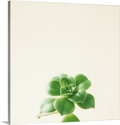 Succulent Simplicity VII Neutral