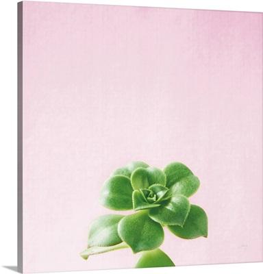 Succulent Simplicity VII on Pink