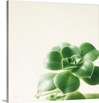 Succulent Simplicity VIII Neutral