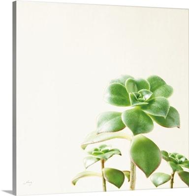 Succulent Simplicity X Neutral