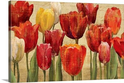Tulip Fantasy on Cream