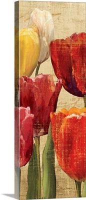 Tulip Fantasy on Cream III