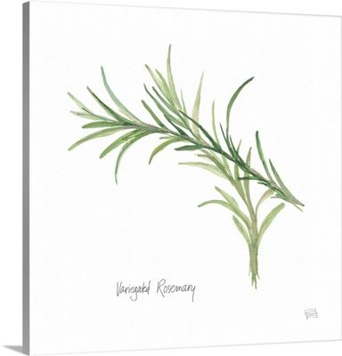 Variegated Rosemary