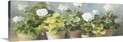 White Geraniums v2