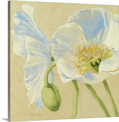 White Poppies II