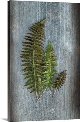 Woodland Fern VI