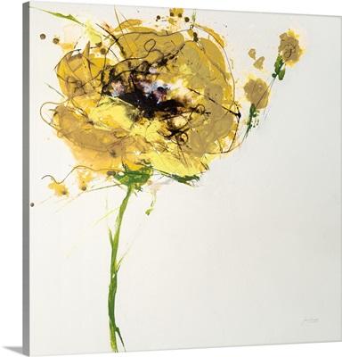 Yellow Poppy Master on White