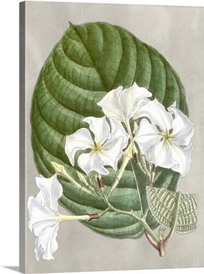 Alabaster Blooms I