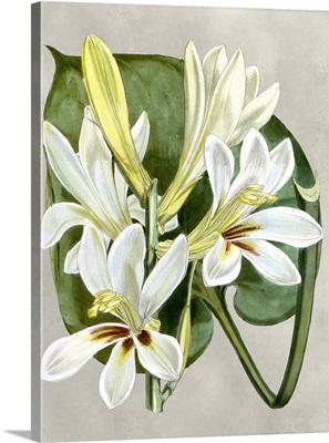 Alabaster Blooms IV