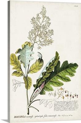 Alluring Botanical I