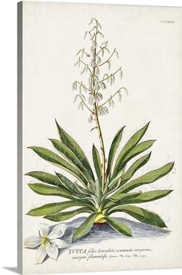 Alluring Botanical III