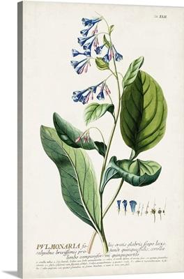 Alluring Botanical V