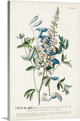 Alluring Botanical VII