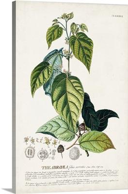 Alluring Botanical VIII