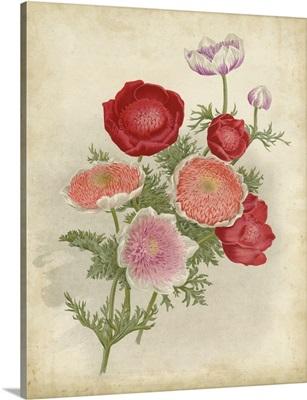 Anemone Florilegium