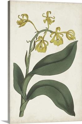 Antique Botanical Collection X