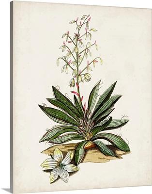Antique Botanical Study I