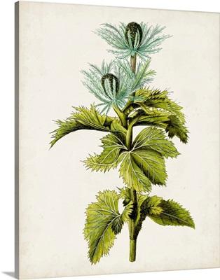 Antique Botanical Study III