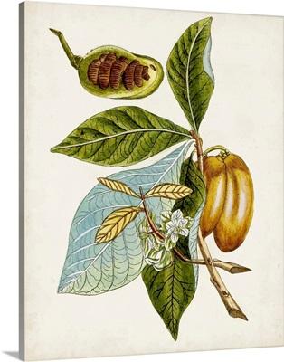 Antique Botanical Study VI