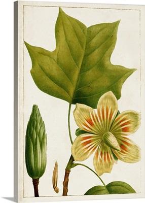 Antique Flowering Trees IV