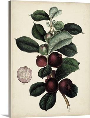 Antique Foliage and Fruit I