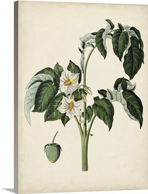 Antique Foliage and Fruit II