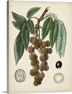 Antique Foliage and Fruit III
