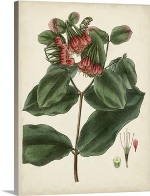 Antique Foliage and Fruit IV