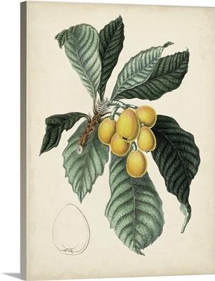 Antique Foliage and Fruit VI