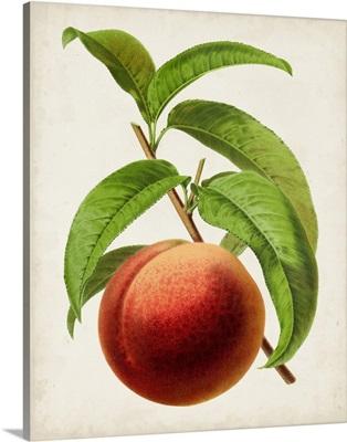 Antique Fruit V