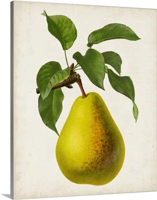 Antique Fruit VII