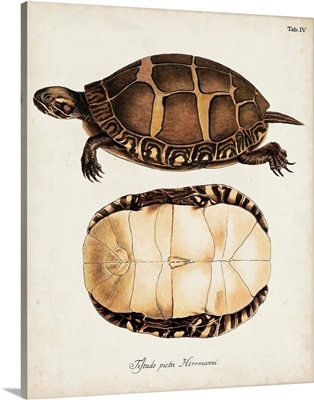 Antique Turtles and Shells IV